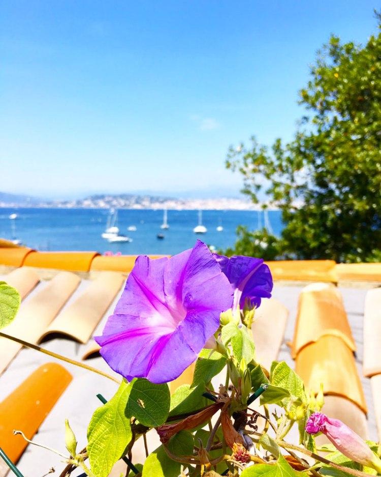 île sainte marguerite avec sa fleur - blog lifestyle