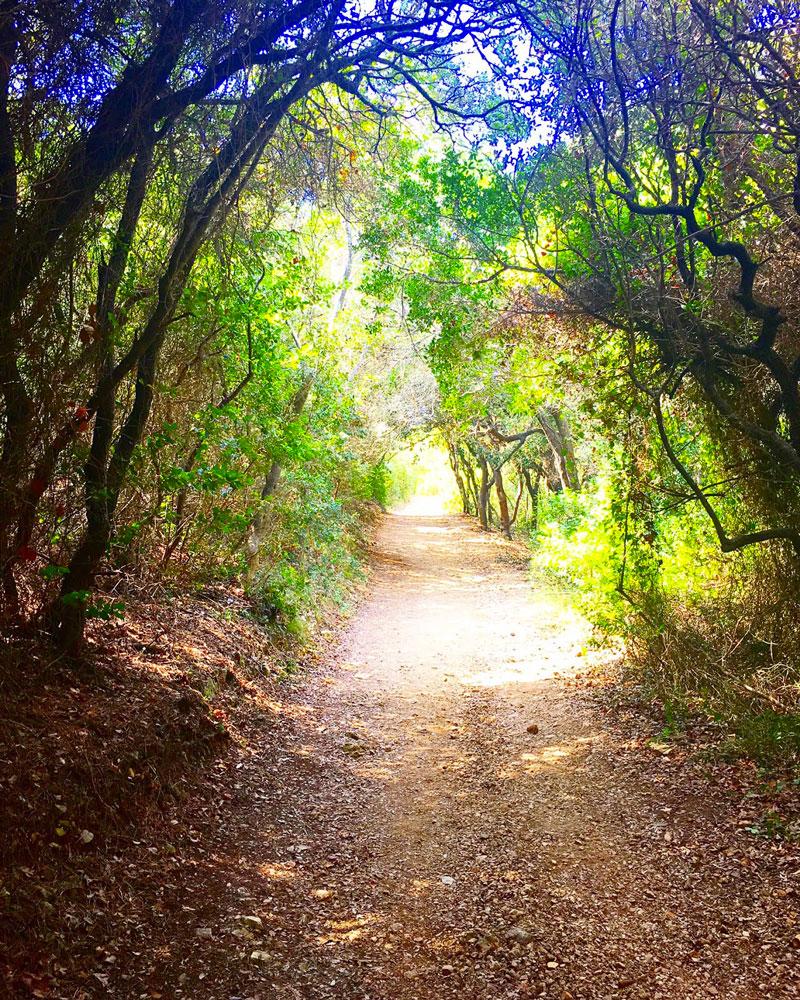 île sainte marguerite et sa foret - blog lifestyle