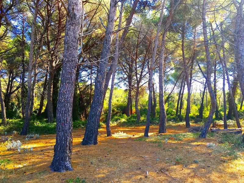 foret île sainte marguerite - blog lifestyle