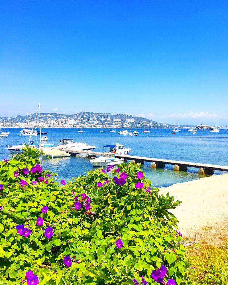 île sainte marguerite avec ses fleurs - blog lifestyle