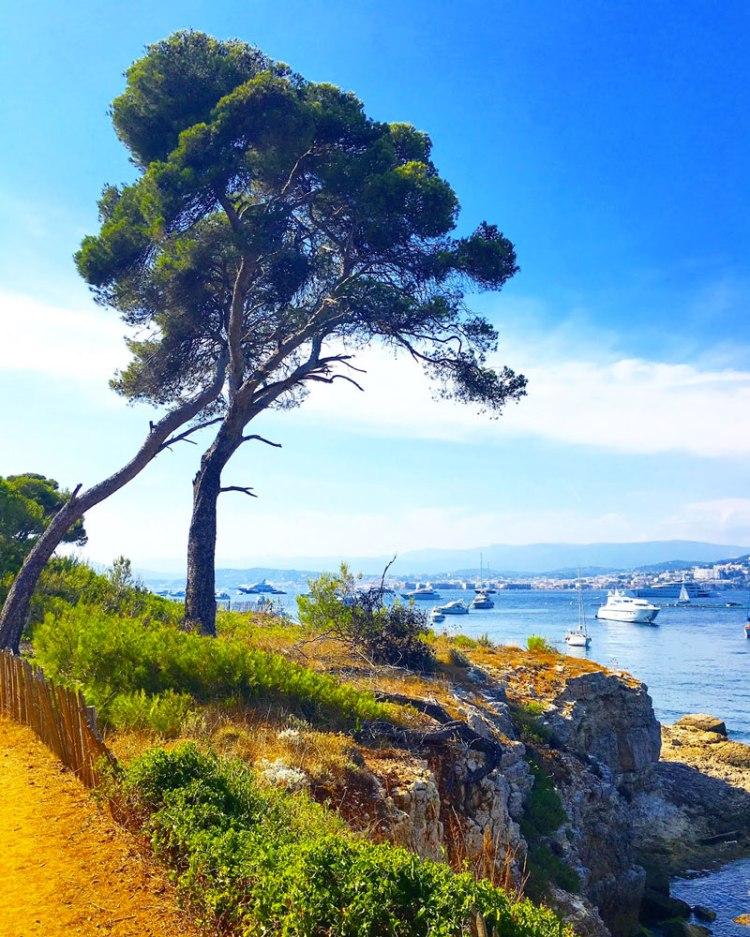 arbre île sainte marguerite - blog lifestyle